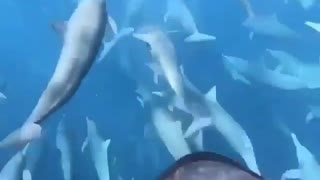 Dive with dolphins and fishes under the sea