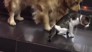 2 cats fight over some food and dogy comes in