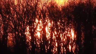 Gorgeous Effects In Sky From Sun In Trees - Video