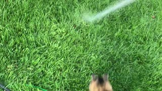 Cat Has Fun with Hose