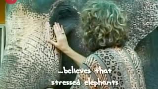 Elephant Massage - Video