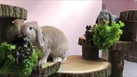 Rabbits Eat Food on Their own wooden House.