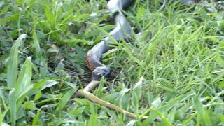 It's a Snake Eat Snake World - Video