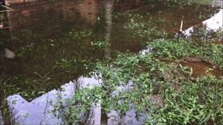 Flooding in our backyard  - Video