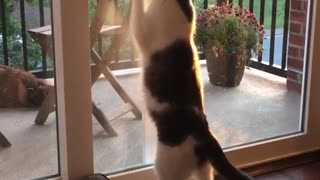 Congress mans earth shattering encounter with glass door cat paws a glass door video planetlyrics Gallery