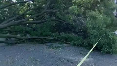 Three trees down multiple cars damaged