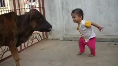 An adorable little kid showing love and effecting for cow, the kid give food in cow's mouth