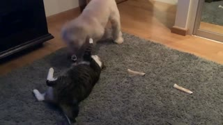 Charlie and Mitten Playing