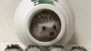 hedgehog sitting in his ship with his kids  - Video