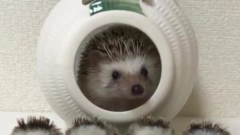 hedgehog sitting in his ship with his kids