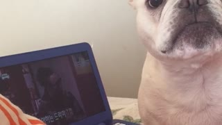French Bulldog is begging to go outside - Video