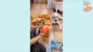 Cute Puppies Cute Funny and Smart Dogs Compilation #2