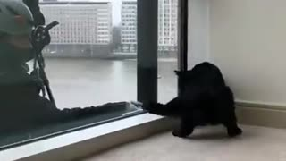 Interesting cleaning windows is amazing along with cats - Video