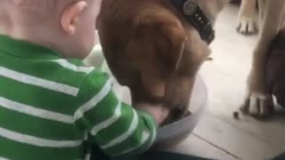 Baby helps feed his hungry doggy
