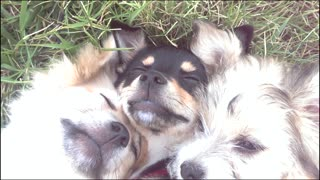 Cuddling puppies enjoy a moment - Video