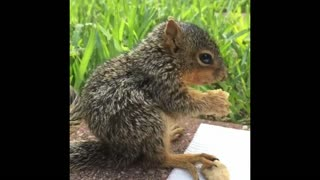 Man Rescued and Raised an Adorable Baby Squirrel - Video