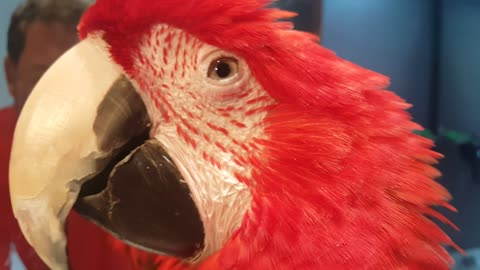 The parrot feeling in live