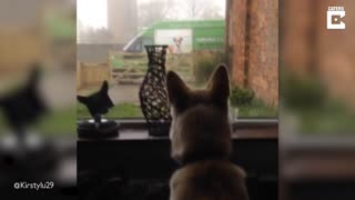 Confused Canine Barks At Dog Outside Window – Only For It To Be Picture On A Delivery Van
