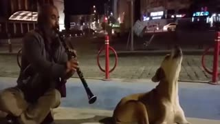 The dog that accompanied the clarinet sound - Video