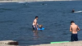 Brown dog owner helping dog blue surfboard surfing