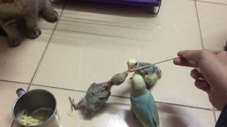 Cat Learns Lesson from Bird - Video