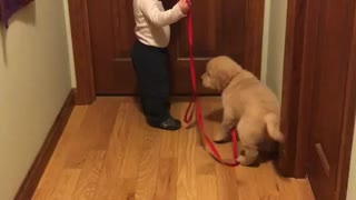 Toddler preciously takes puppy for a walk - Video