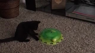 Cat enjoys spin toy