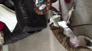 Belly rubs from grandma  - Video