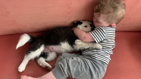 Toddler Sings to Border Collie Puppy