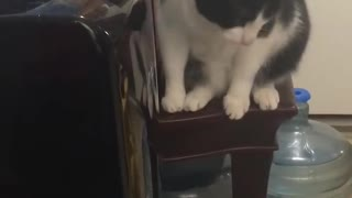 Kitty Works out How to Dispense Water
