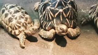 babies turtles - Video
