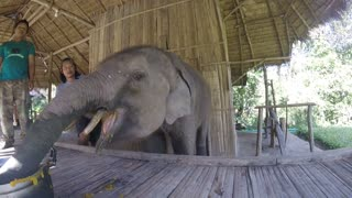 Baby elephant with down syndrome loves his pumpkin - Video