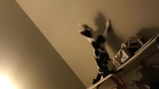 Collab copyright protection - laser pointer cat fall fail