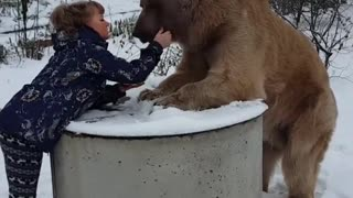 Woman and bear casually enjoy breakfast together - Video