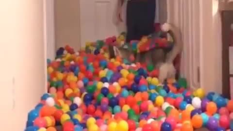 small balls hall for little dogs