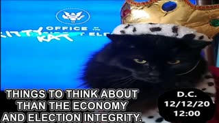 An Important Message from the Kitty Kat Elect