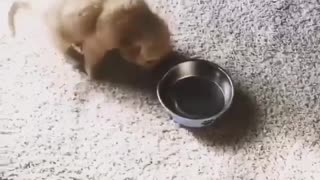 dog moves around with  his plate for food - Video