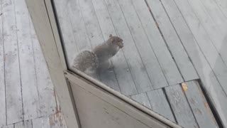 Rufus The Conservative Squirrel