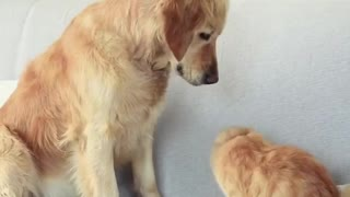 dog and cat play together