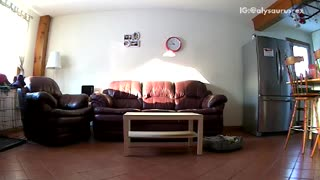 Brown dog jumps in front of security camera and moves it