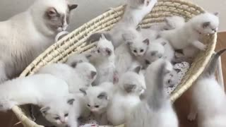 "Watching This Kitty Cuddle Puddle Will Make You Go ""Awwww"" - Video"