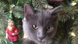 Cat's first Christmas is so exciting - Video