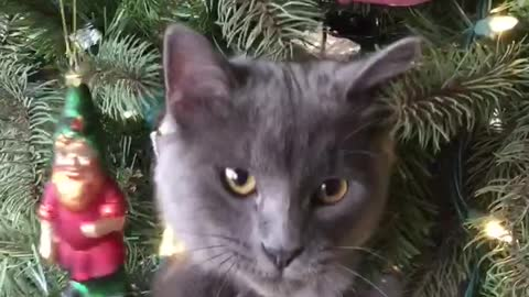 Cat's first Christmas is so exciting