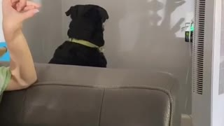 Pooch Mesmerized by Shadow Puppet