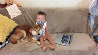 Tender moment shared between Shiba Inu & toddler