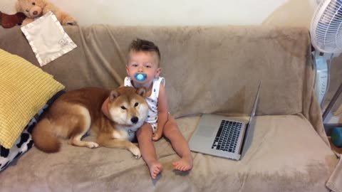 Tender Moment Shared Between Shiba Inu And Toddler