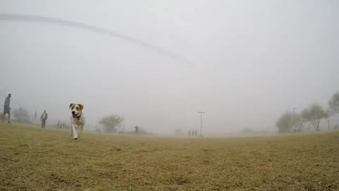 Playful dog steals and runs off with GoPro
