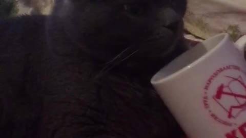 Cat perched next to the mug and does not want to leave