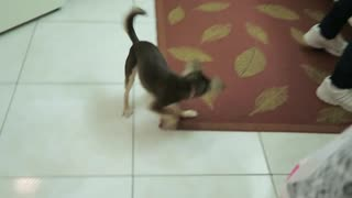 Puppy Vs Laser beam - Video