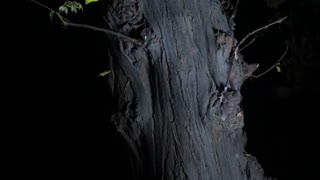 horror tree in very old village  - Video